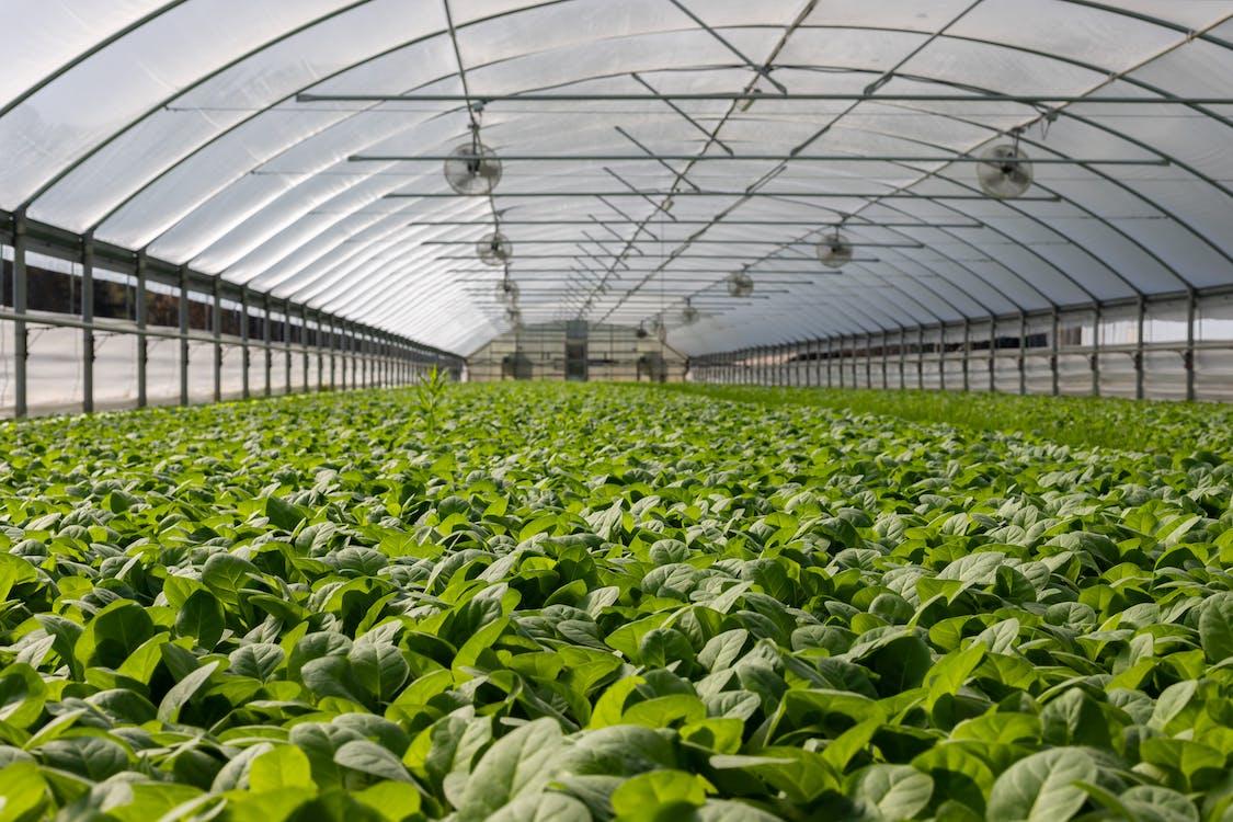adentro, agricultura, agricultura moderna