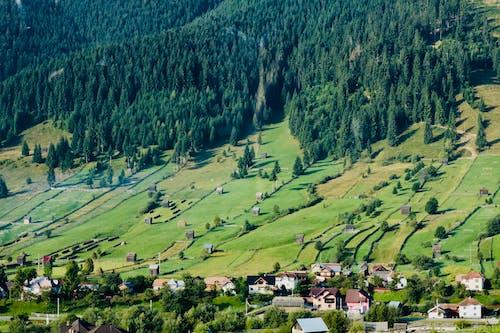 下田, 原本, 家園, 山丘 的 免費圖庫相片