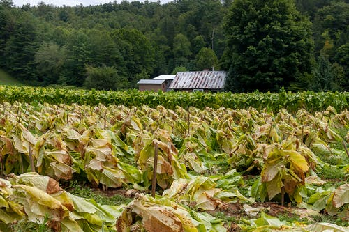 คลังภาพถ่ายฟรี ของ agbiopix, การเกษตร, พืชผล, ภูเขา