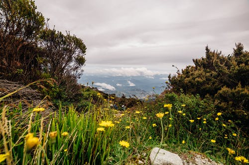 Wild Flowers In A Mountain