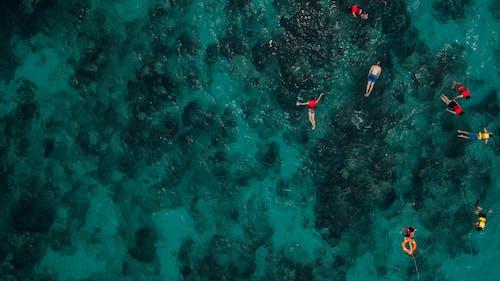 Бесплатное стоковое фото с акваланг, вода, водные виды спорта, высокий угол