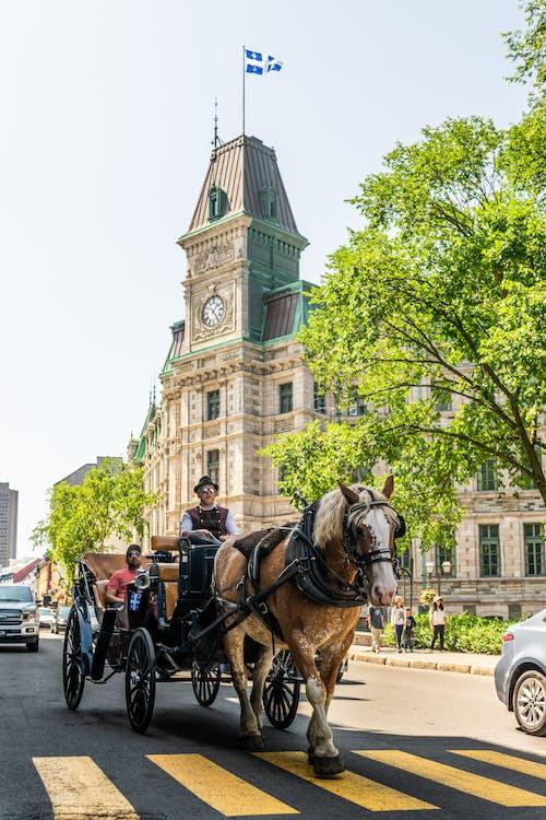カナダ, クロックタワー, ケベック, シティの無料の写真素材