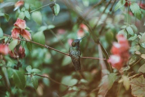 A Hummingbird Perched On A Twig