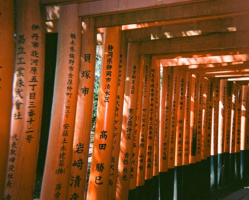 Darmowe zdjęcie z galerii z drewniany, drewno, dzień, kolory