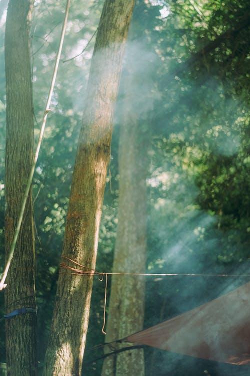Free stock photo of forest, light, ray, smoke