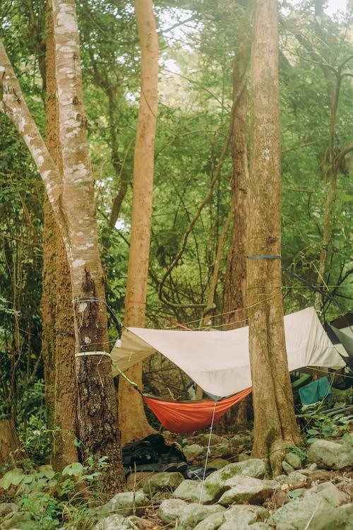 Kostnadsfri bild av äventyr, blad, camping, dagsljus