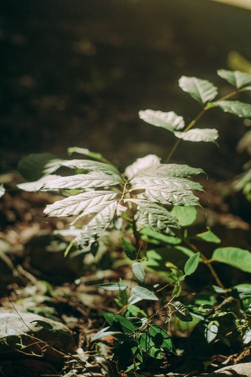 Free stock photo of green, leaf, light, sunlight