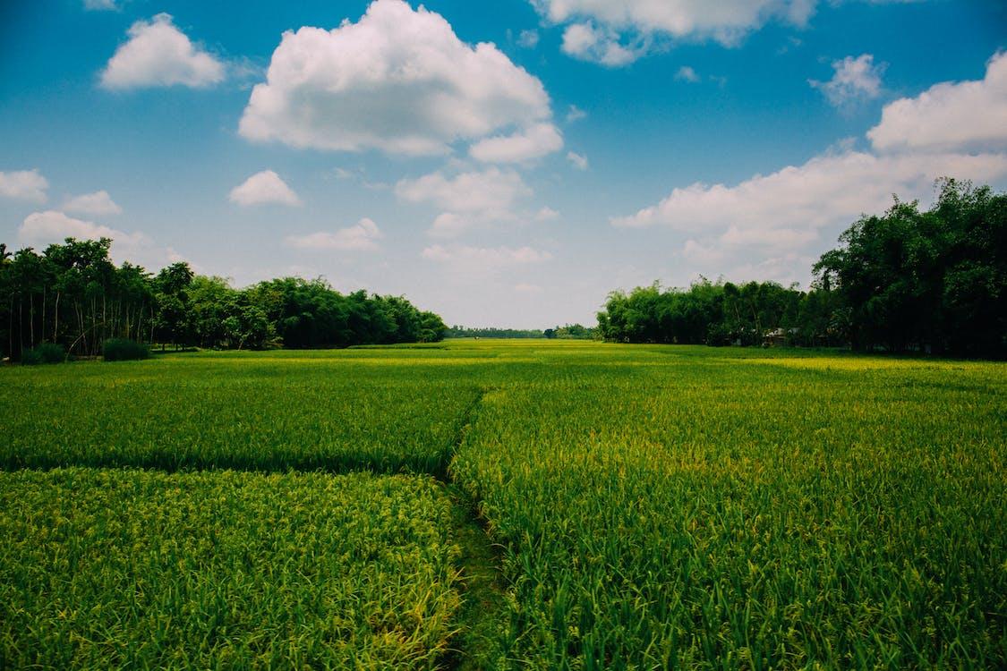 Photo Of Farmland During Daytime