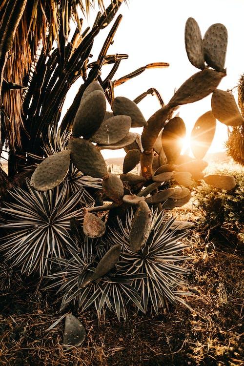 仙人掌, 仙人掌植物, 刺, 增長 的 免费素材照片