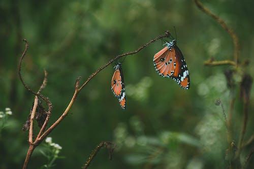 Ilmainen kuvapankkikuva tunnisteilla antenni, appelsiini, eläimet, hyönteiset