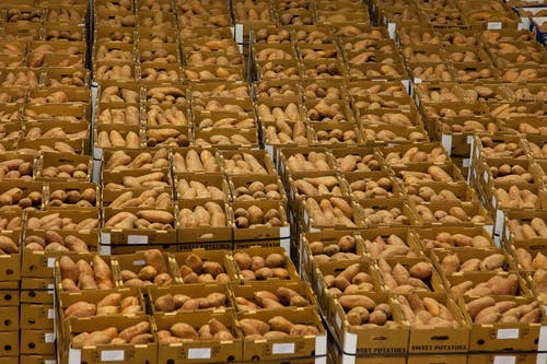 คลังภาพถ่ายฟรี ของ agbiopix, ก้อนขนมปัง, การขาย, การเกษตร