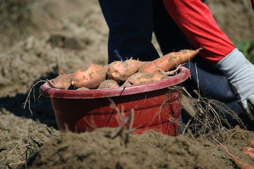 คลังภาพถ่ายฟรี ของ agbiopix, กลางแจ้ง, การทำฟาร์ม, การเกษตร