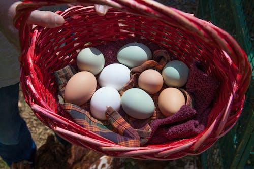 คลังภาพถ่ายฟรี ของ agbiopix, การเกษตร, ตะกร้า, มีสีสัน