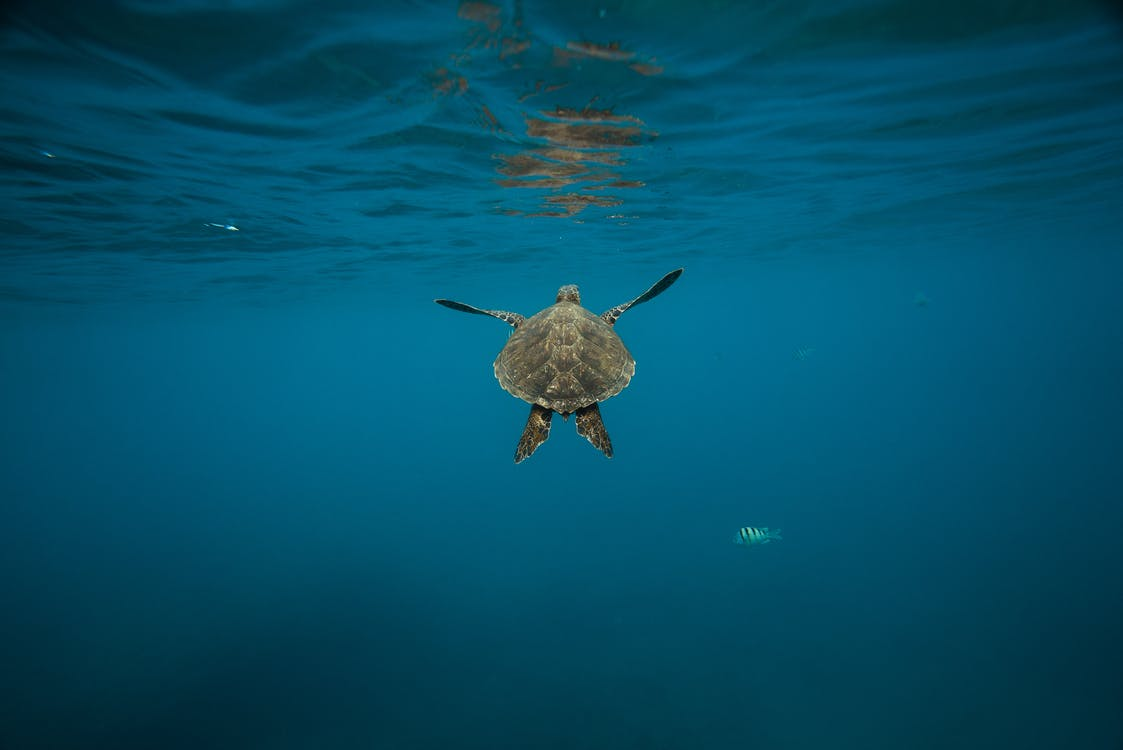 air, akuatik, binatang