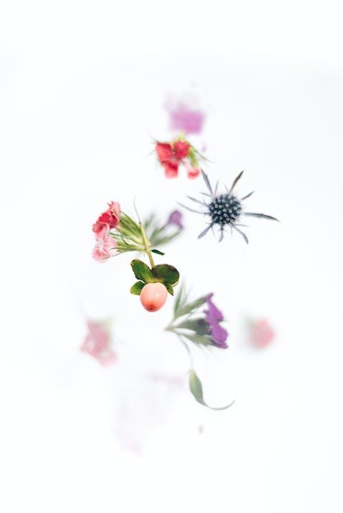 Бесплатное стоковое фото с Ассорти, красный, лепестки, лист