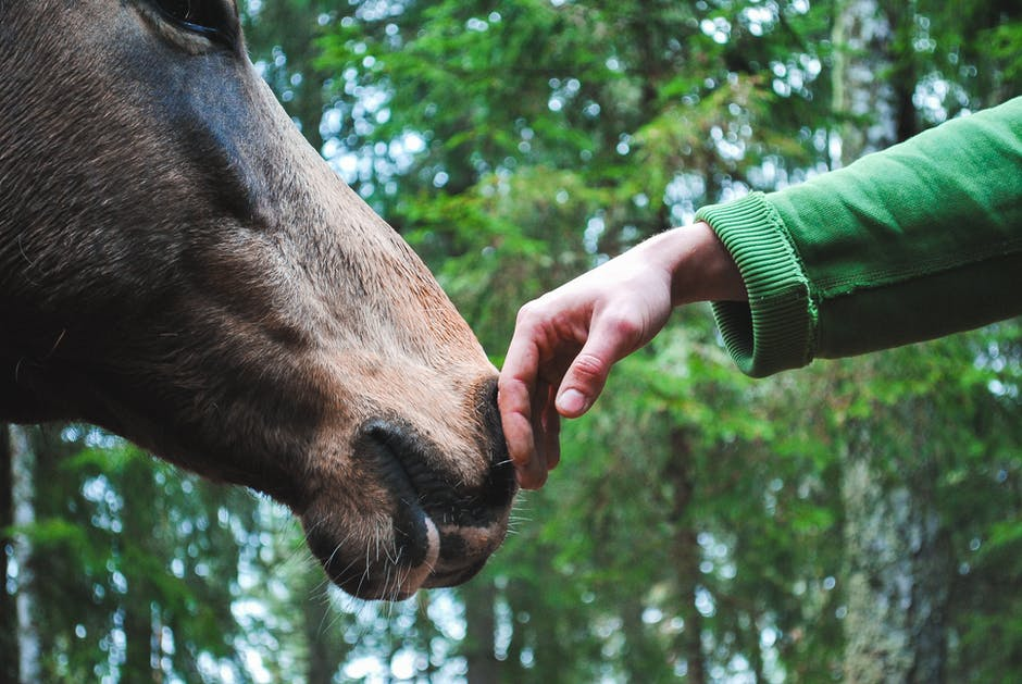 Person s hand touch horse nose