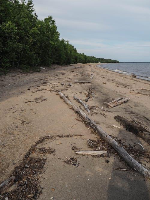 Ingyenes stockfotó erdő, lac, lac saint jean, Quebec témában