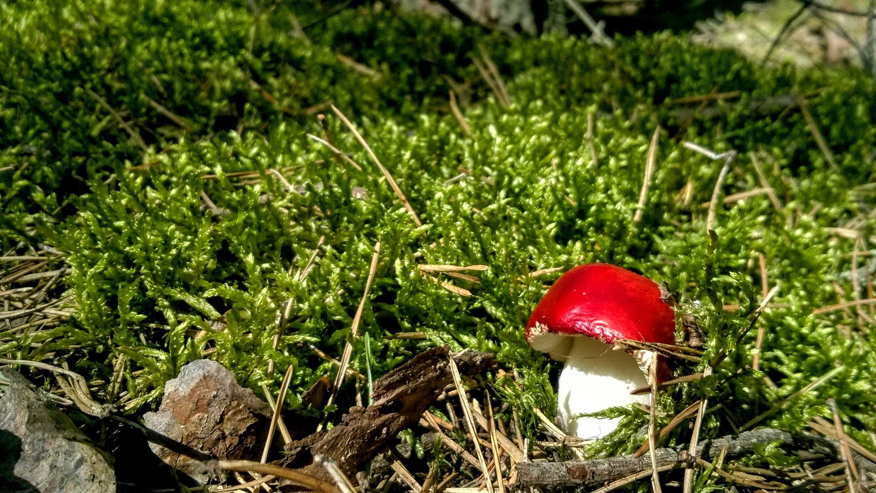 Free stock photo of macro, moss, toadstool
