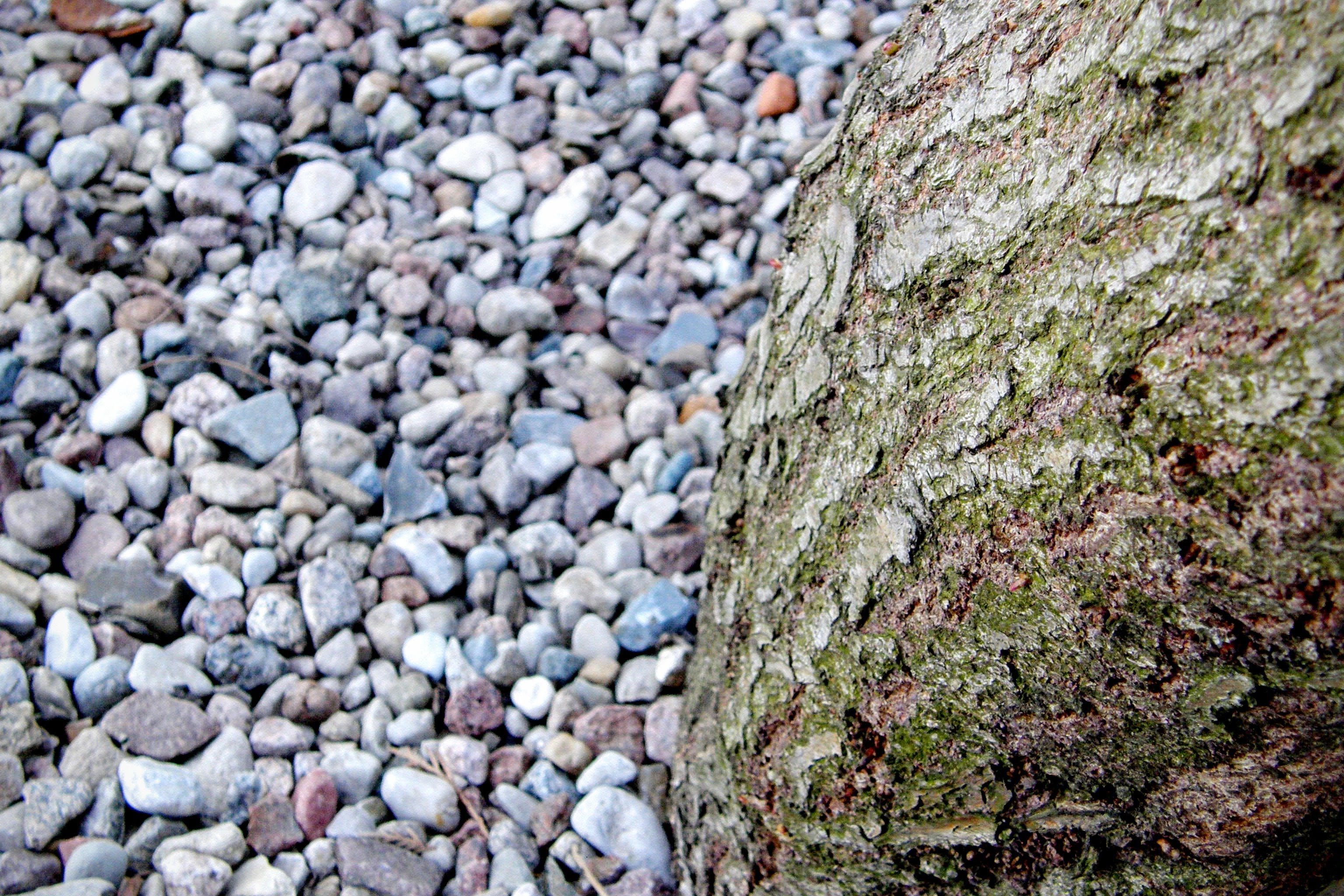 Free stock photo of rocks, wood