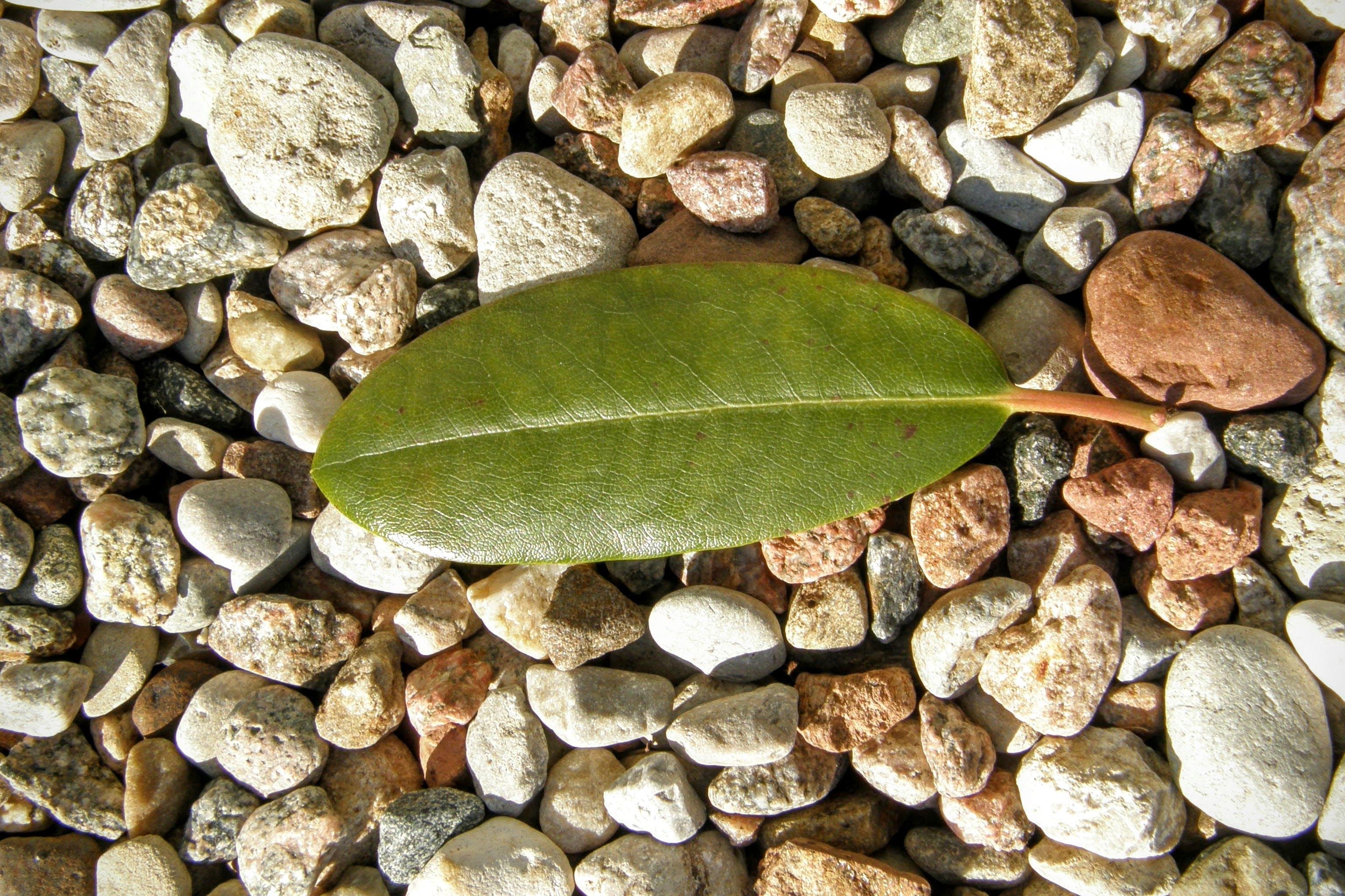 Free stock photo of leaf, macro, rocks