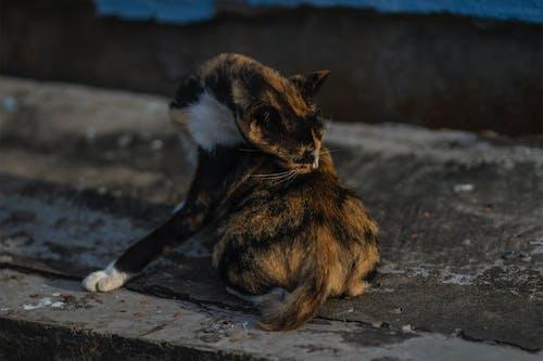 Photos gratuites de chat, un chat errant