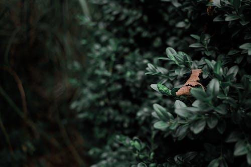 Immagine gratuita di impianto, piante verde scuro, verde scuro
