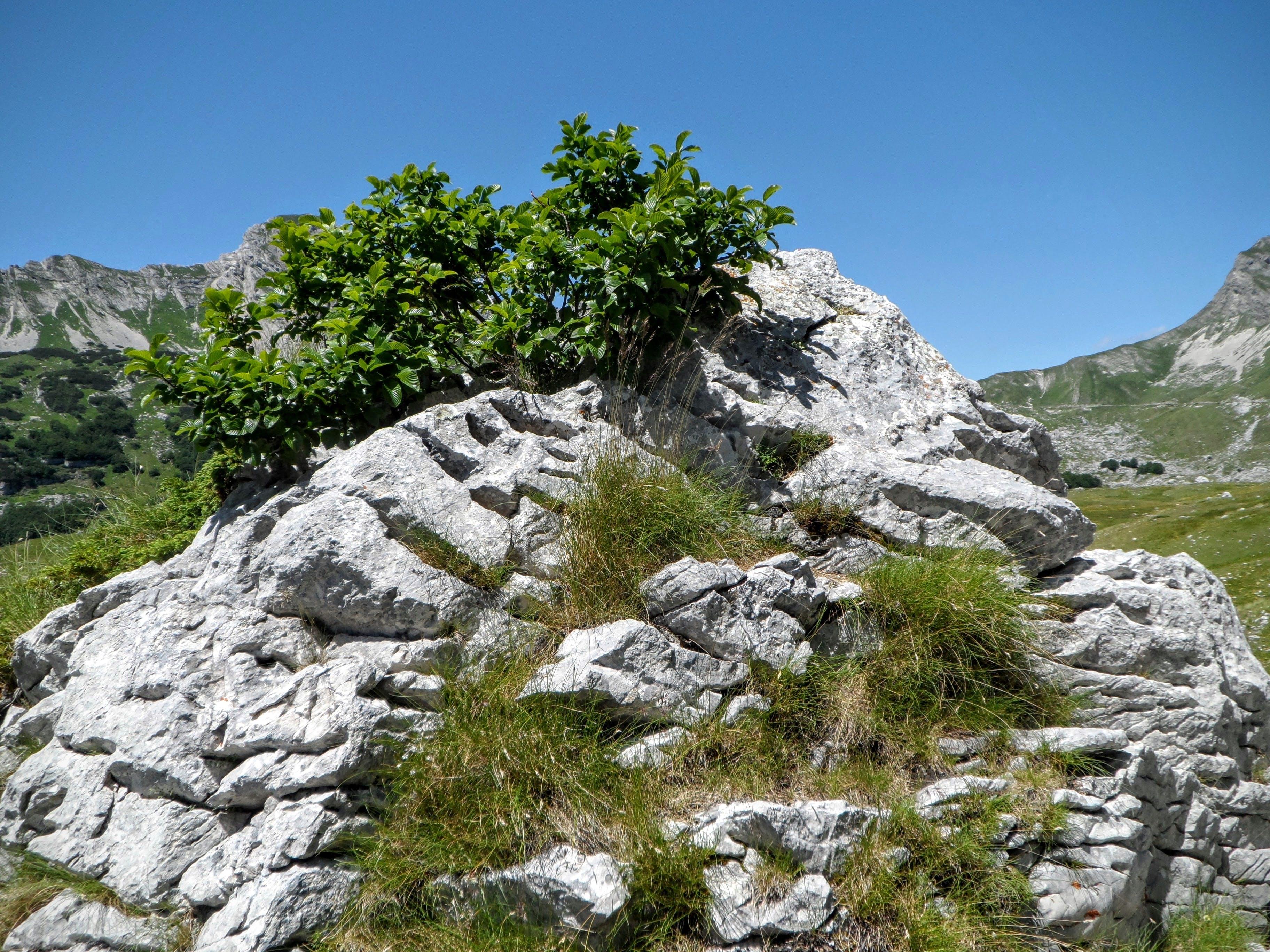 Free stock photo of blue sky, grass, limestone, plant