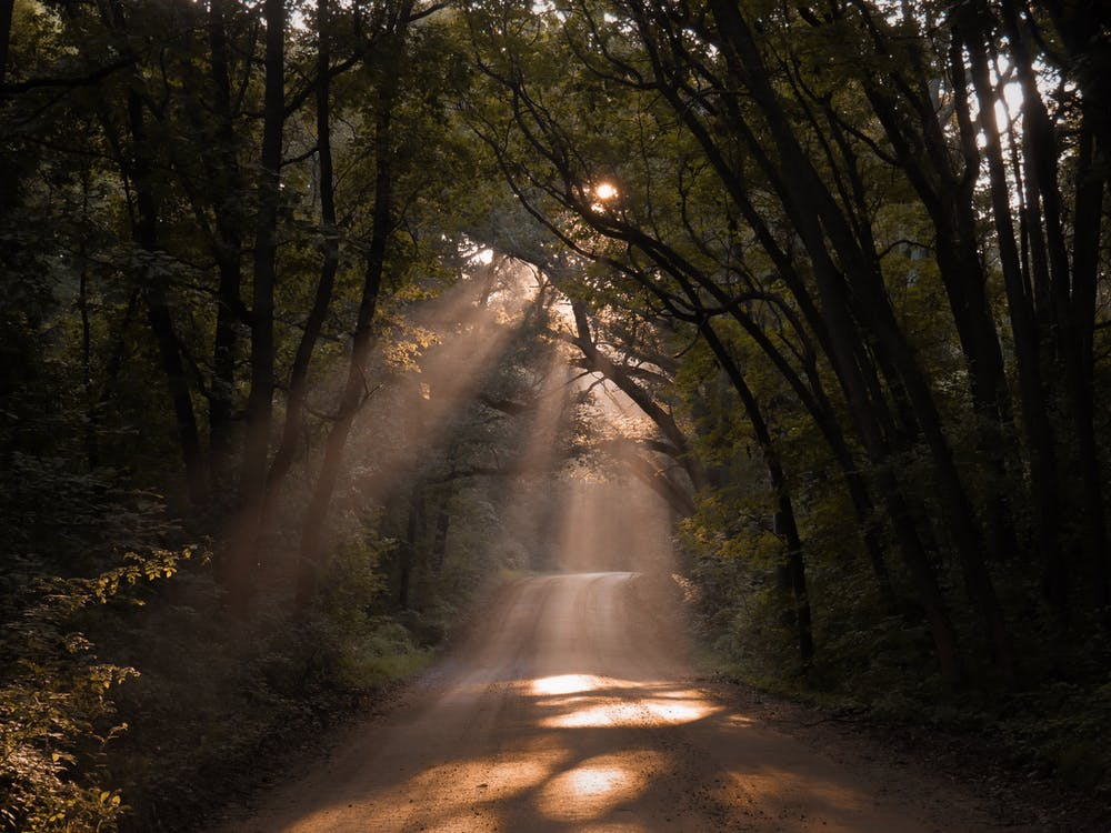 Unpaved Road With Sunlight Through The Trees