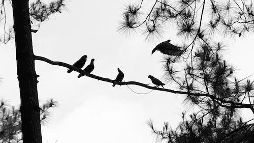 Foto profissional grátis de árvores, ave, floresta, mosca