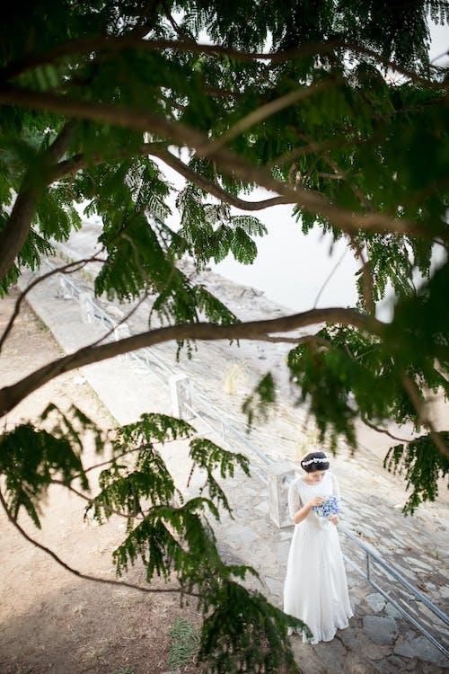 Gratis stockfoto met bladeren, boom, bruid, bruidsjurk