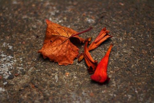 Foto profissional grátis de asfalto, borrão, declínio, folhas caídas