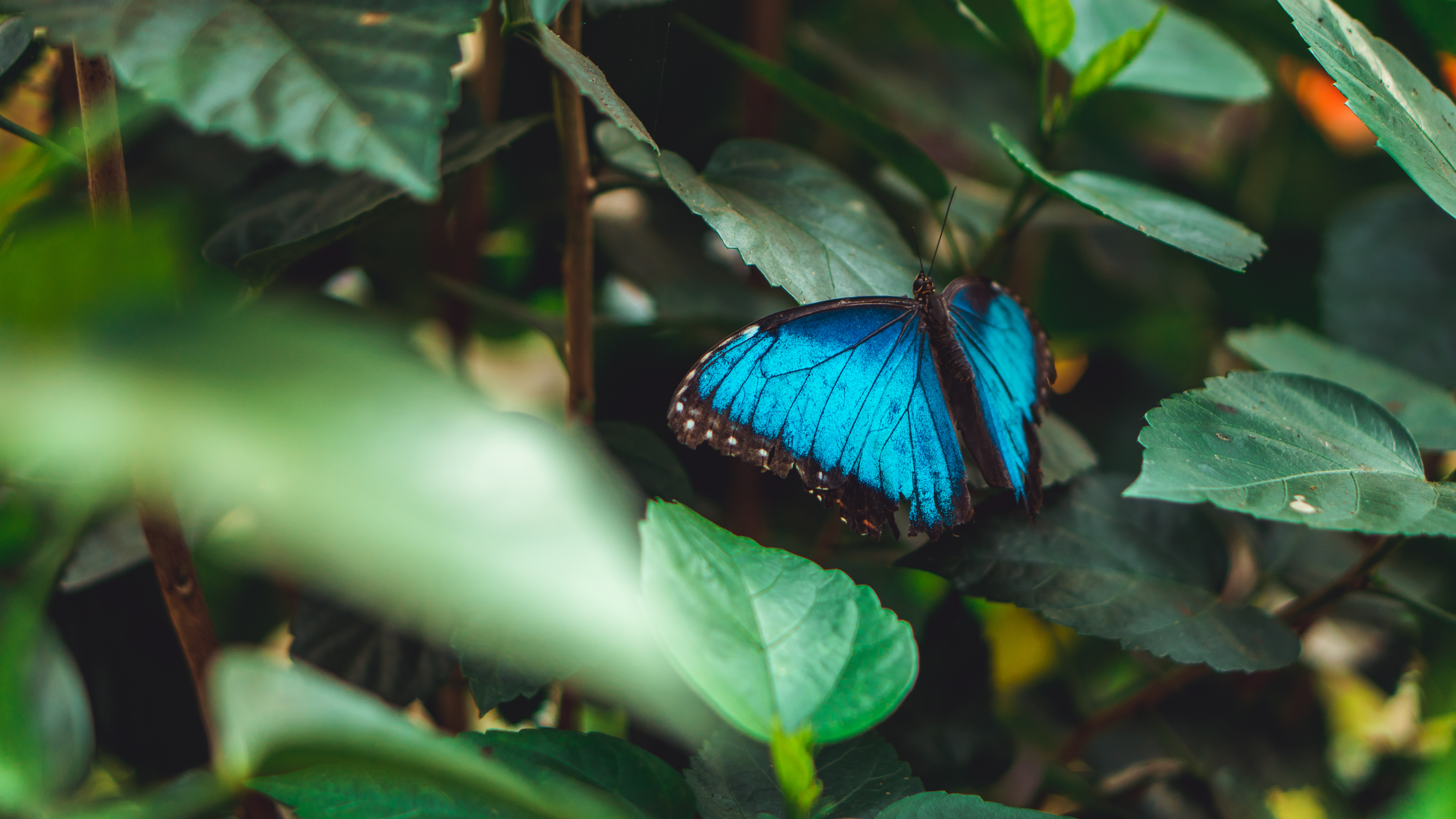Photo Of A Blue Butterfly