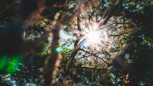 Fotobanka sbezplatnými fotkami na tému hĺbka ostrosti, listy, lúče slnka, nízkouhlá fotografia