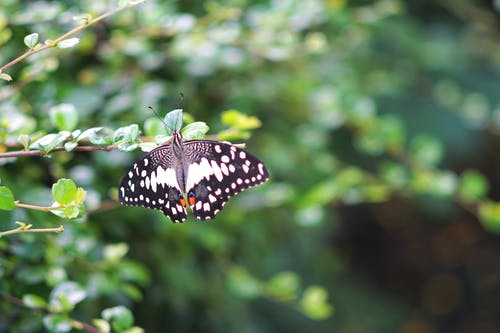 Free stock photo of butterfly, lifestyle, plant life