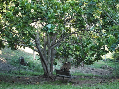 Free stock photo of beautiful, bench, bird, foliage