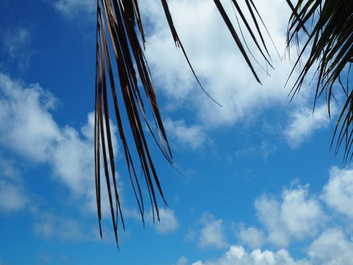 Free stock photo of beach, beautiful, Big leaf, blue sky