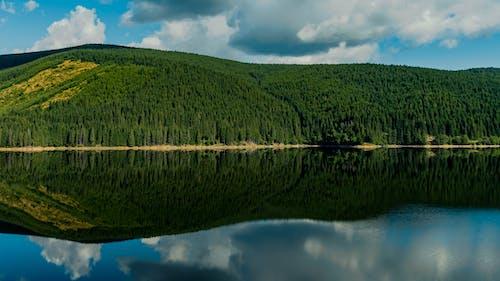 Mirror Scenery of Green Trees Island