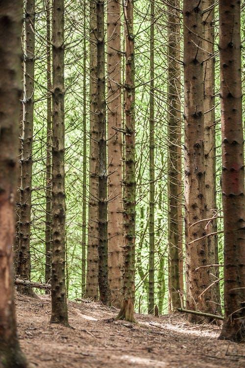 açık hava, ağaç gövdesi, ağaç kabuğu, ağaçlar içeren Ücretsiz stok fotoğraf