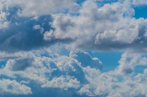 açık, arka fon, atmosfer, bahar içeren Ücretsiz stok fotoğraf