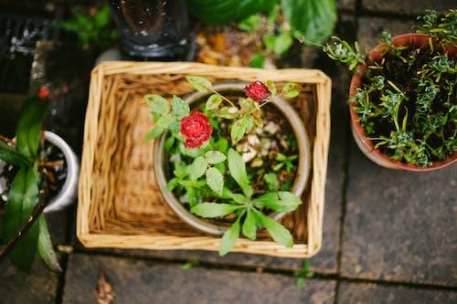 Бесплатное стоковое фото с букет цветов, красивые цветы, цветущие цветы