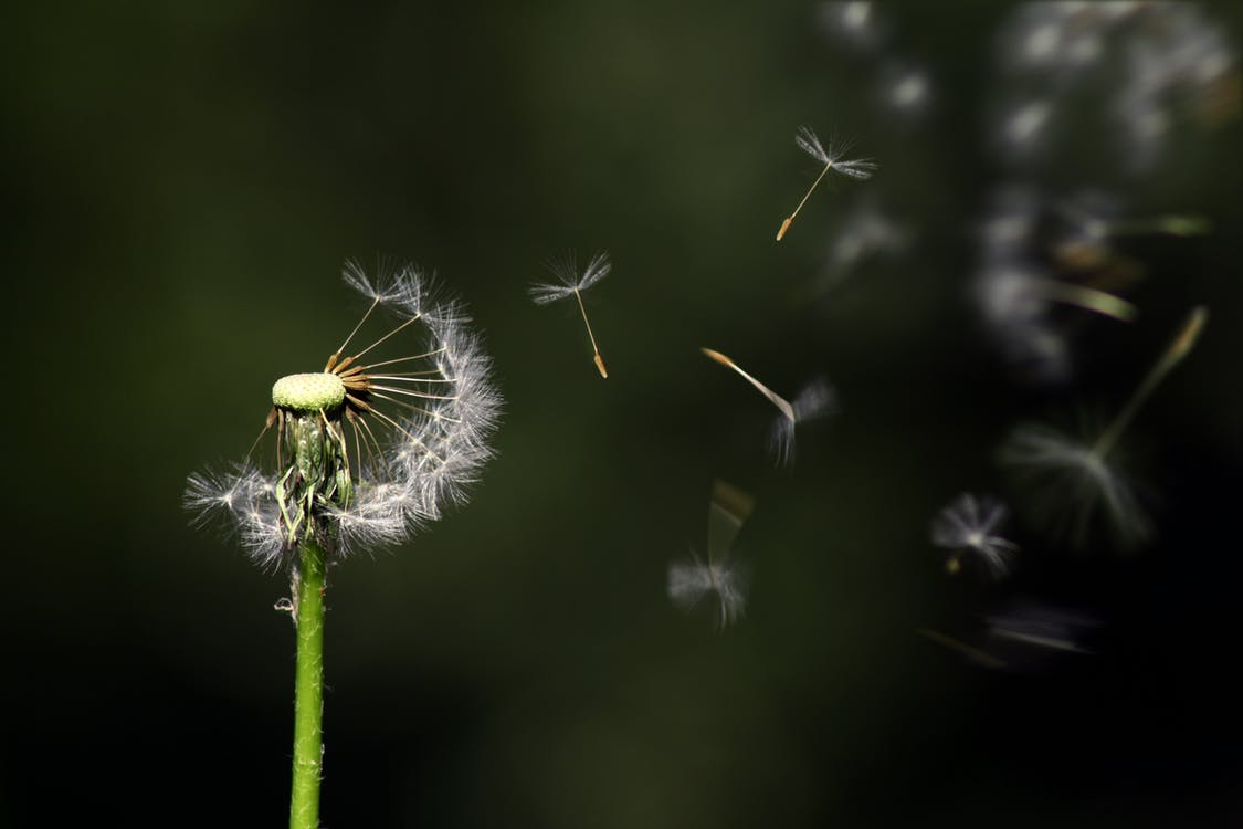 การบิน, การเจริญเติบโต, ก้านดอก