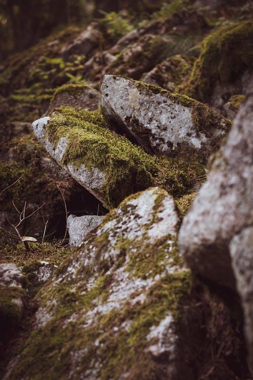 Ilmainen kuvapankkikuva tunnisteilla metsä, sammal, sammaleinen, sammaleiset kivet