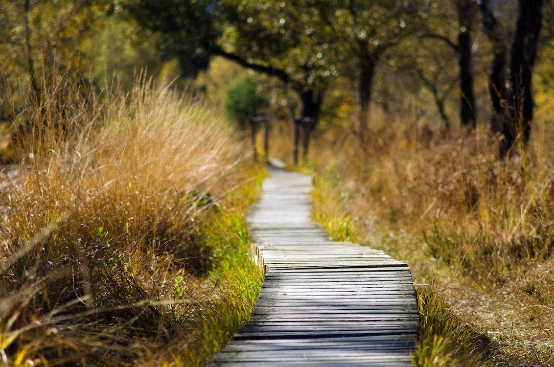 Foto d'estoc gratuïta de a l'aire lliure, arbres, aventura