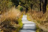 wood, road, nature