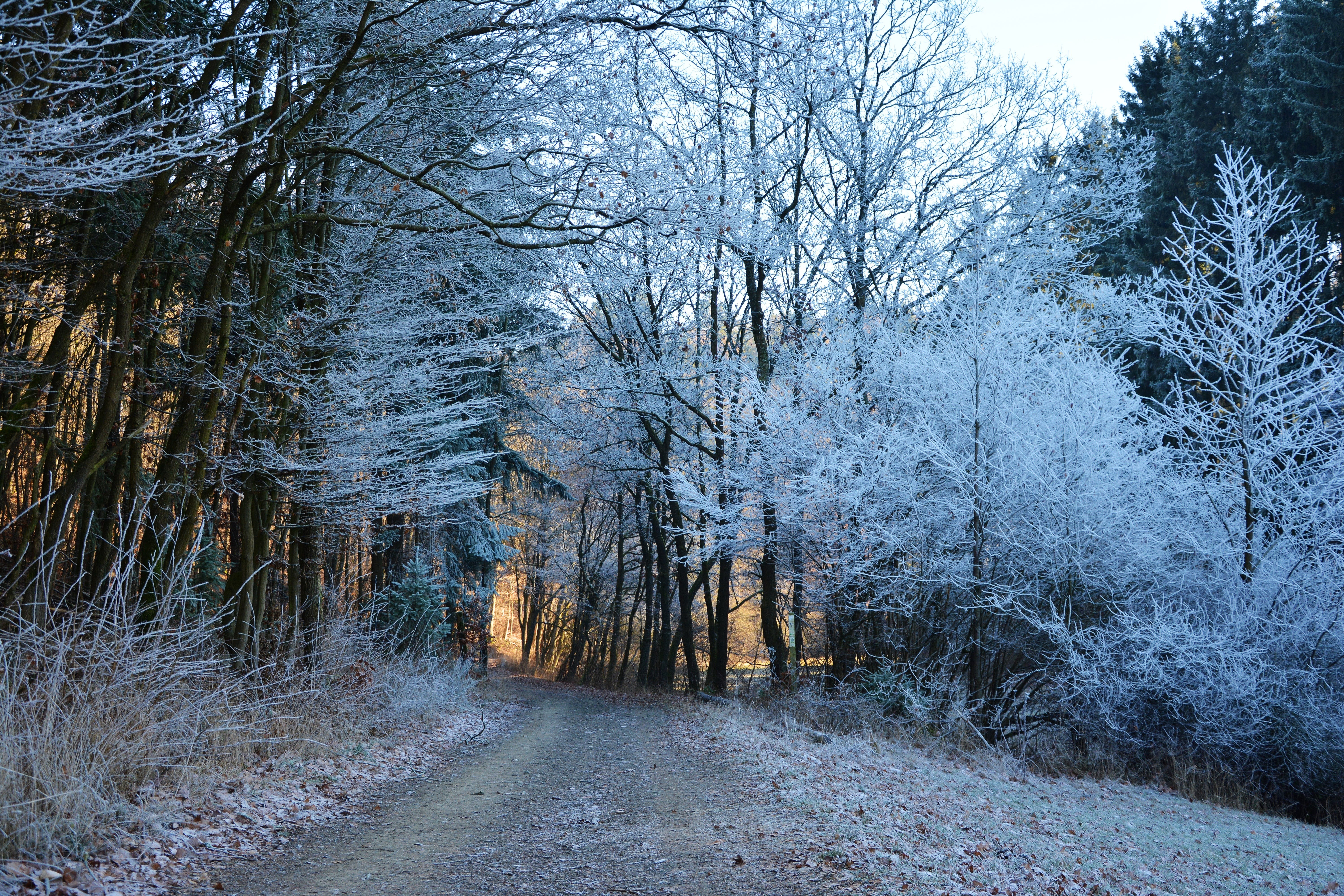 Free stock photo of cold, forest, winter, frost