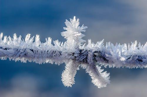 Imagine de stoc gratuită din alb, congelat, cristale, de gheață
