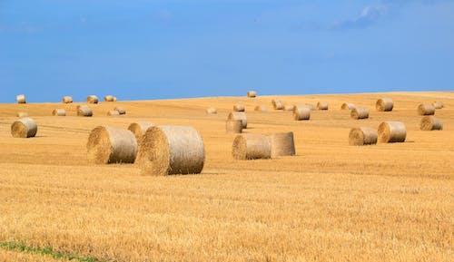 Imagine de stoc gratuită din activități agricole, arabil, arid, balot