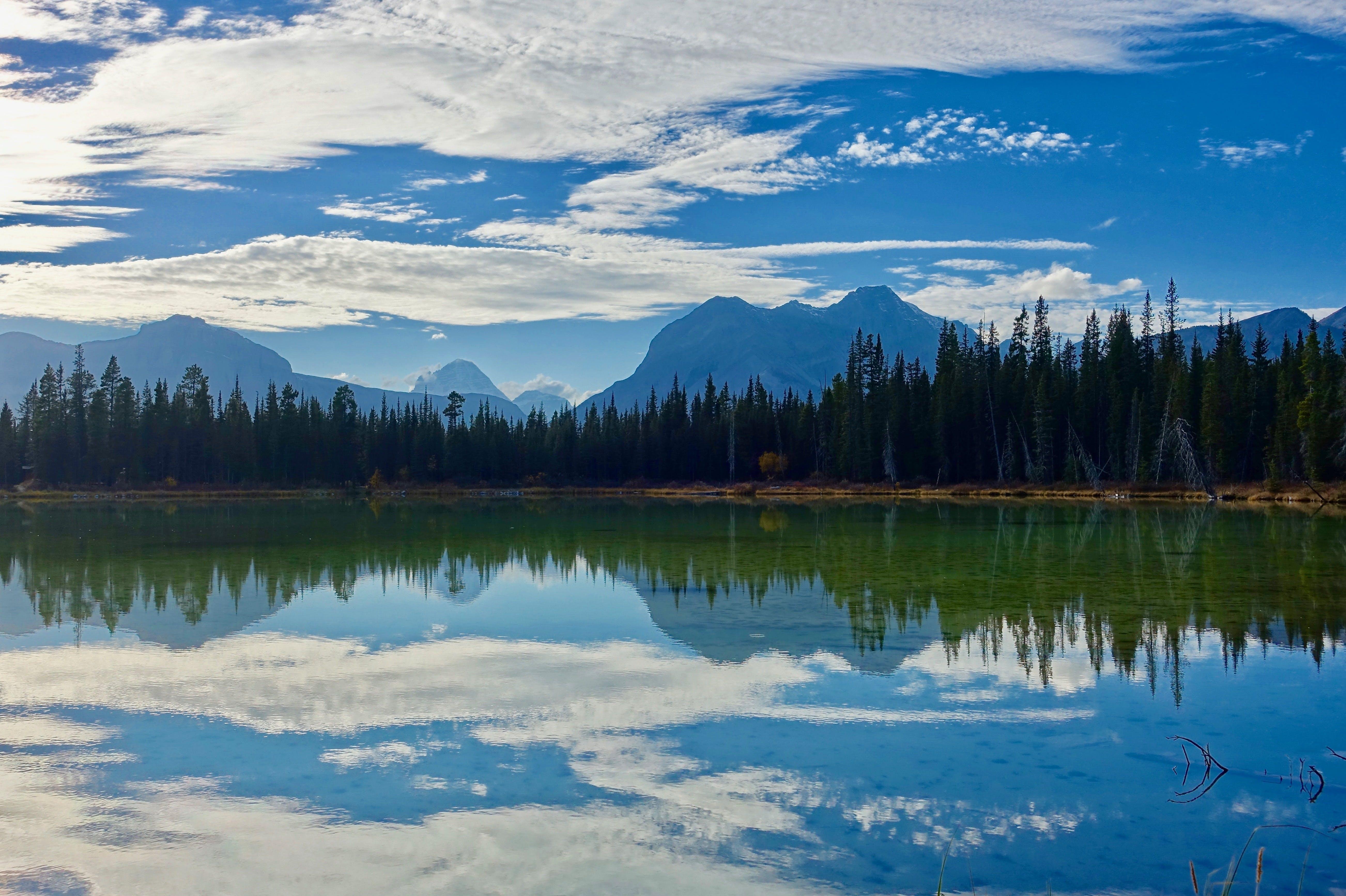 zu bäume, berg, friedvoll, landschaft