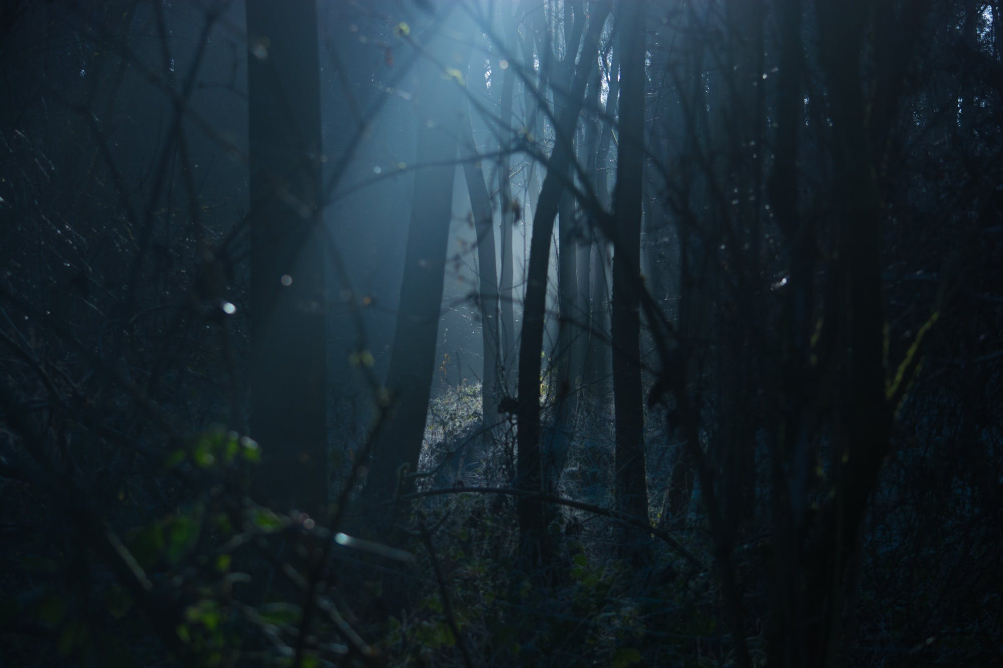 Základová fotografie zdarma na téma děsivý, fantazie, horor, krajina