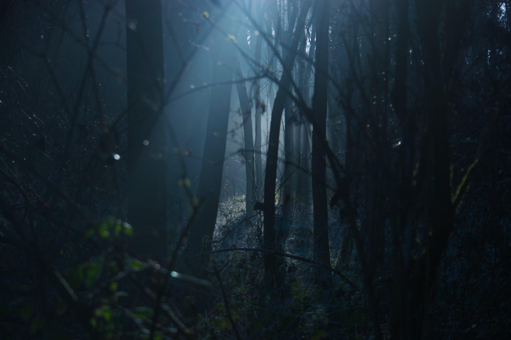 backlit, creepy, dark
